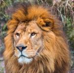 【心理テスト】ライオンの背中に乗っている人がいます。誰ですか?